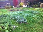 The Garden :)